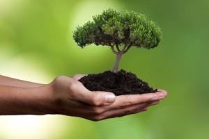 Nachhaltige Aktienfonds - Investiton in die Zukunft